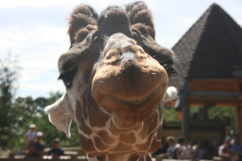 Giraffe exhibit at Cheyenne Mountain Zoo in Colorado Springs, Colorado
